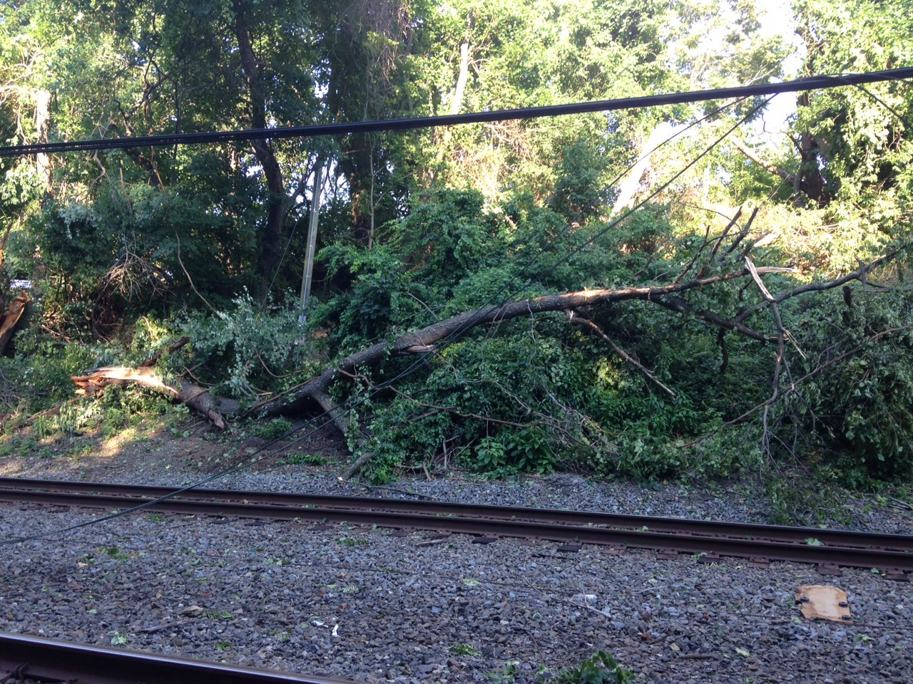 The power problem that caused the  suspension of service on the Fox Chase Regional Rail Line was the result of a tree, located in the CSX right of way, falling into the track area.